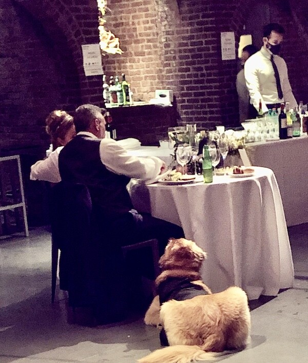 Bride and Groom enjoying wedding meal with their Golden Retriever